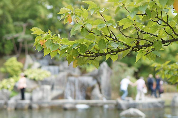 Der Japanische Garten in Hasselt hat einiges zu bieten. Von schönen Rundwegen hin zu klassischen Zeremonien und Workshops.